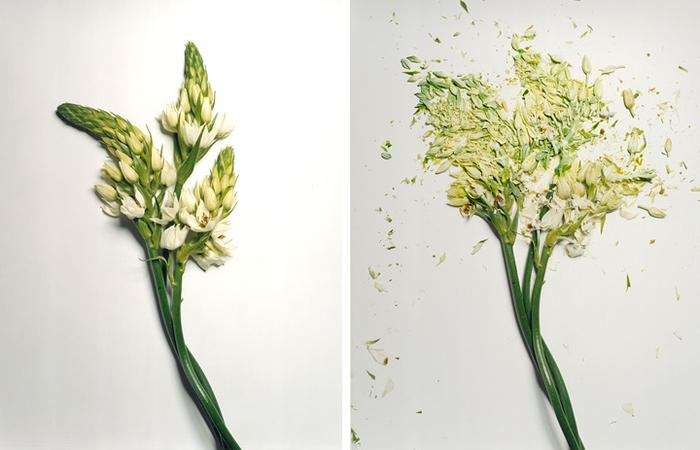 jon-shireman-borken-flowers-5 (700x450, 249Kb)