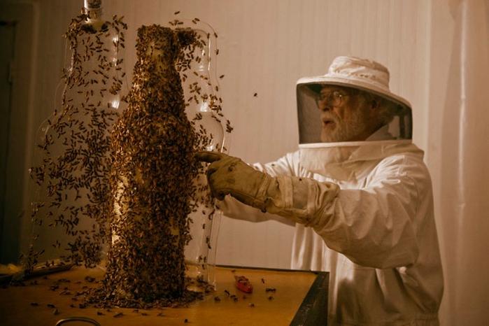скульптуры из пчелиных сот 14 (700x466, 215Kb)