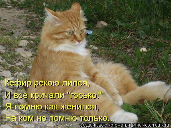 kotomatritsa_i2 (600x450, 160Kb)