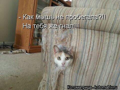 kotomatritsa_3 (480x360, 97Kb)
