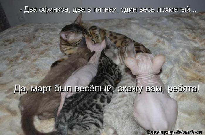 kotomatritsa_232 (700x462, 202Kb)