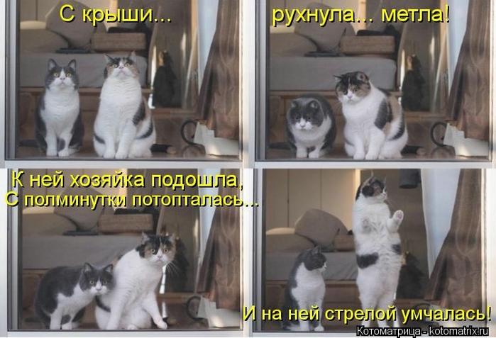 kotomatritsa_aL (700x477, 224Kb)