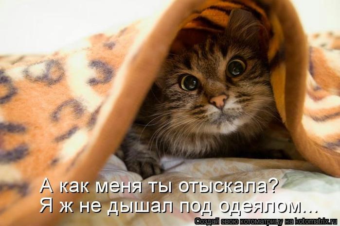 kotomatritsa_K3 (700x466, 208Kb)