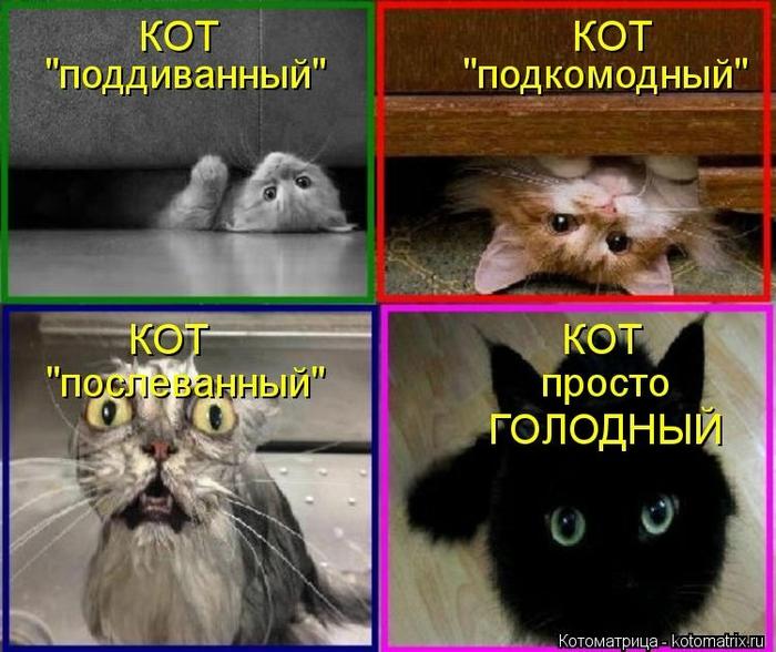 kotomatritsa_oz (700x588, 265Kb)