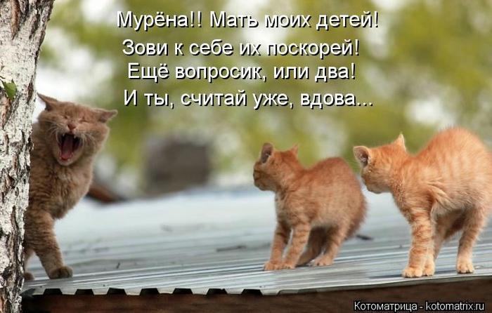 kotomatritsa_-P (700x446, 212Kb)