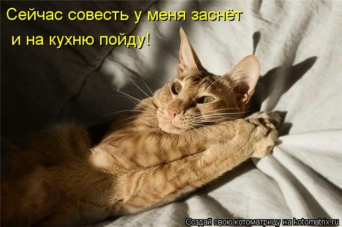 kotomatritsa_R (700x466, 129Kb)