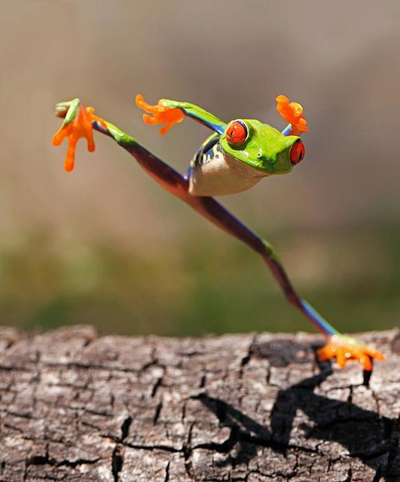 смешные лягушки фото 1 (581x700, 357Kb)