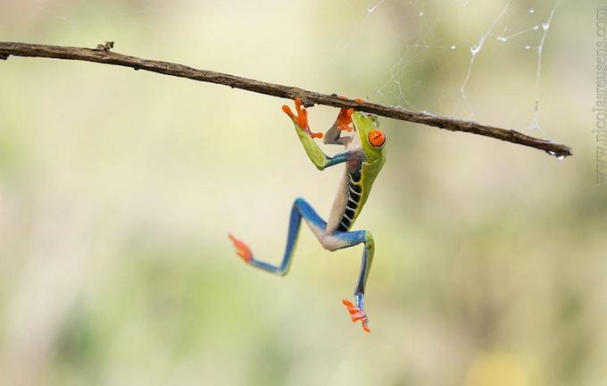 смешные лягушки фото 4 (680x432, 192Kb)