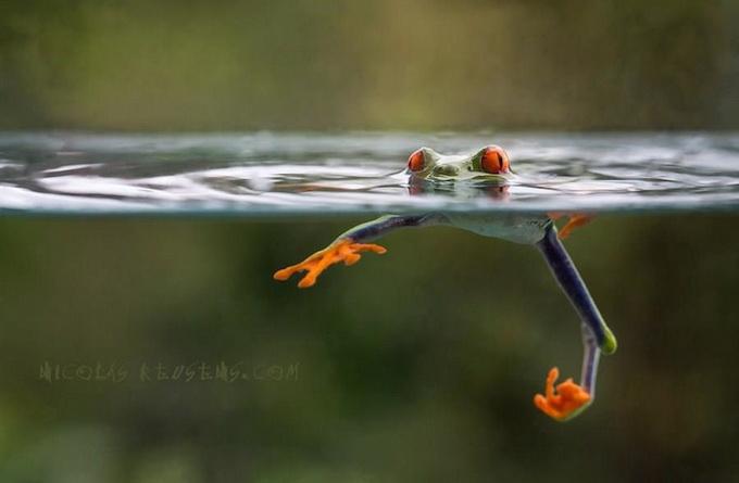 смешные лягушки фото 6 (680x445, 143Kb)