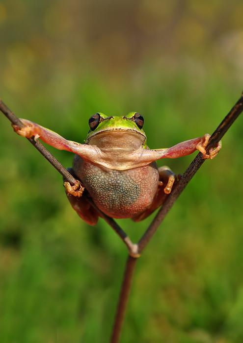 смешные лягушки фото 9 (495x700, 261Kb)