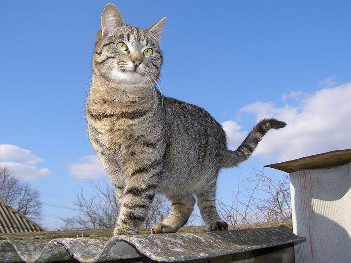 Но кошка знает, что она – тигрица...