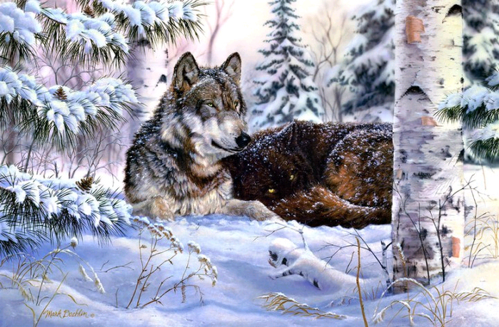волки (700x459, 501Kb)