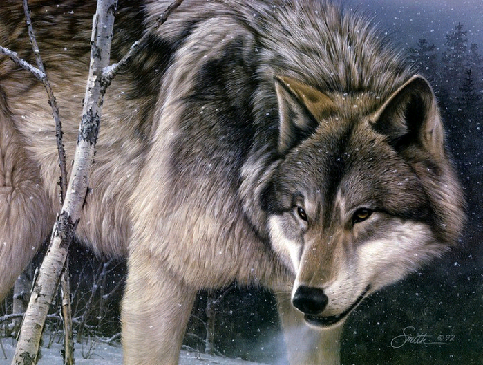 волки3 (700x528, 543Kb)