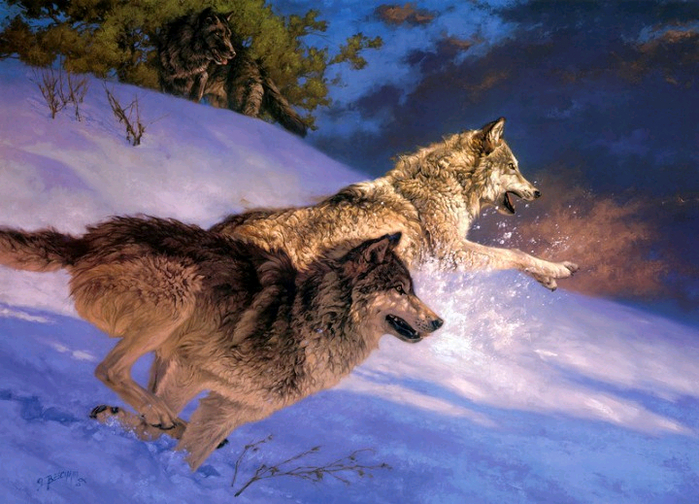 волки5 (700x504, 473Kb)