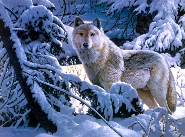 волки8 (700x521, 554Kb)
