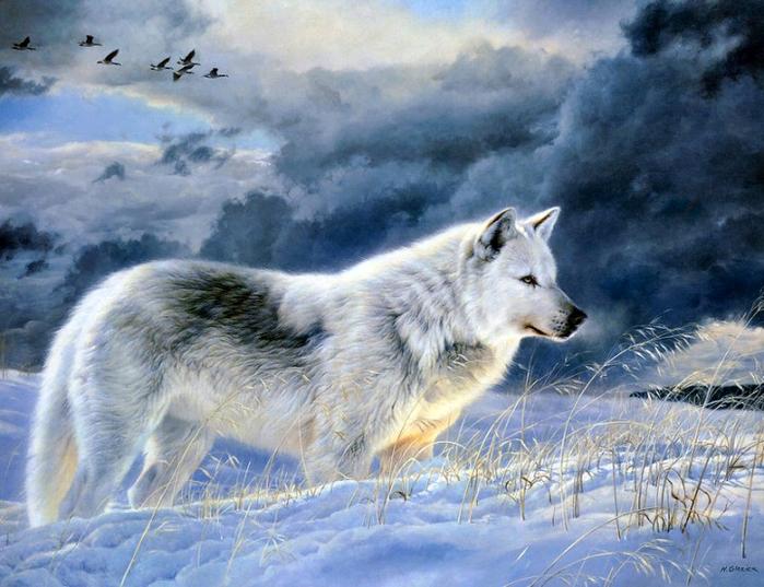 волки10 (700x537, 511Kb)