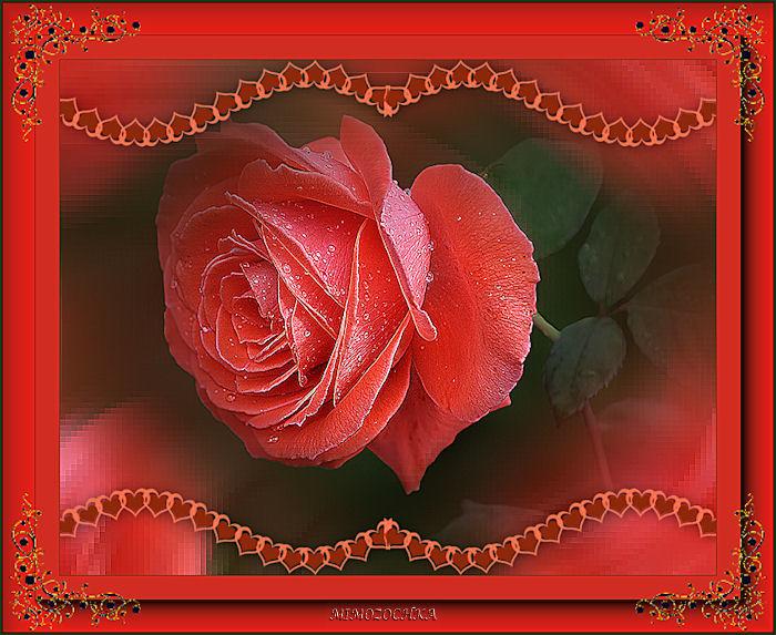 роза (700x573, 124Kb)