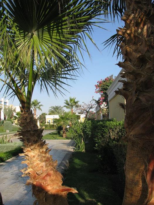 Отель Lillyland в Хургаде4 (525x700, 488Kb)