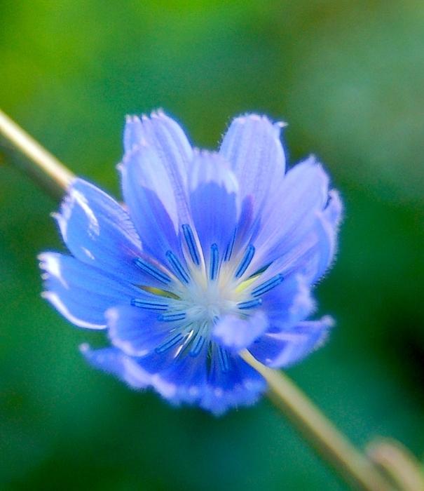 голубая легкость воскресенья10 (605x700, 278Kb)