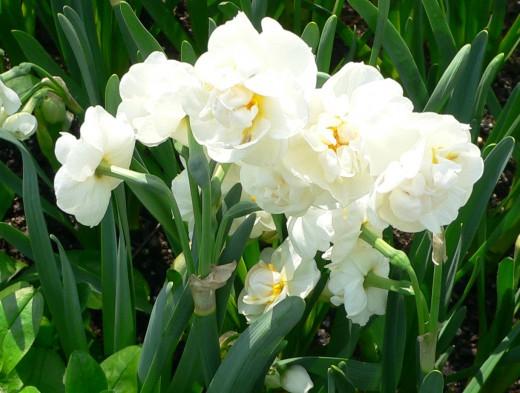 Какие цветы цветут в конце мая