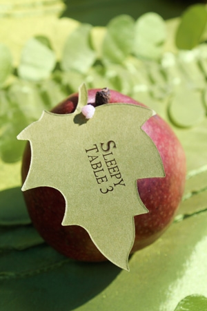 apple-place-cards-cathy-lee-photography (300x450, 92Kb)
