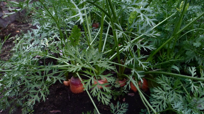 Урожай 005 (500x280, 183Kb)