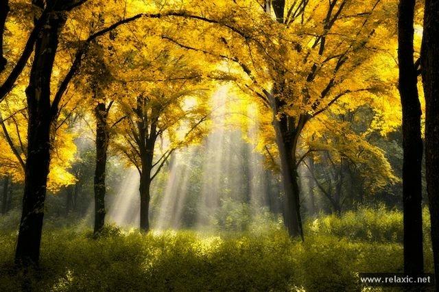 Sun_rays_002 (640x426, 215Kb)