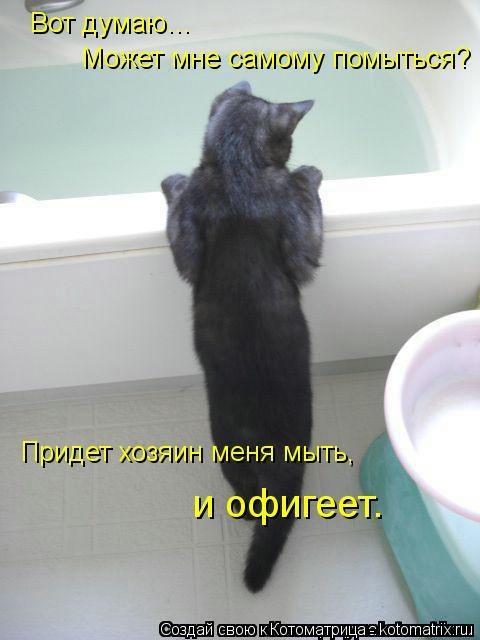 kotomatritsa_7 (480x640, 90Kb)
