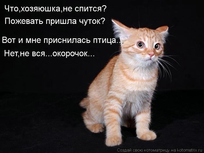 kotomatritsa_9P (700x525, 166Kb)