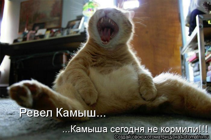 kotomatritsa_H5 (700x467, 125Kb)