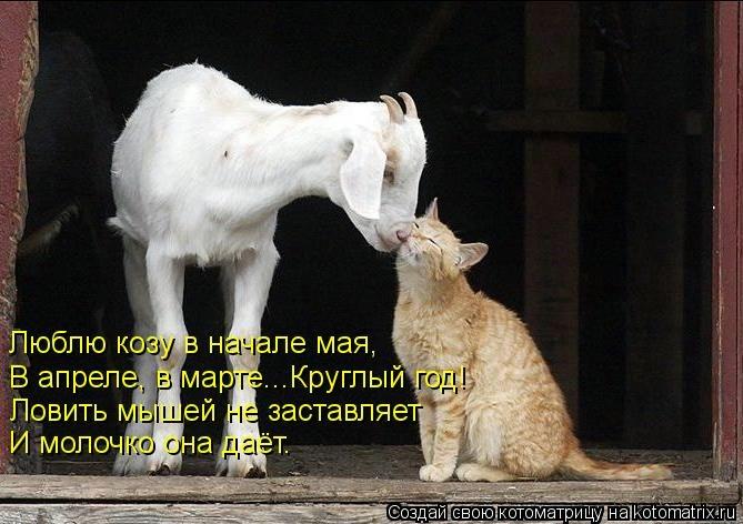 kotomatritsa_ih (669x472, 151Kb)