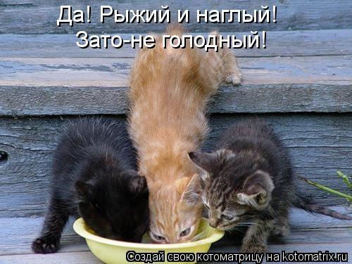 kotomatritsa_pa (500x375, 118Kb)