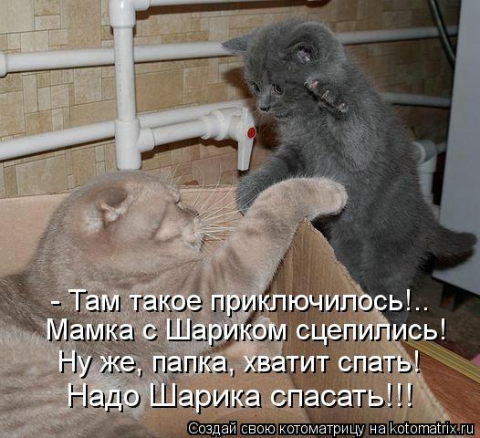kotomatritsa_qP (526x480, 138Kb)