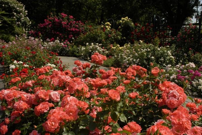 2835299_RoseGarden_32 (700x468, 89Kb)