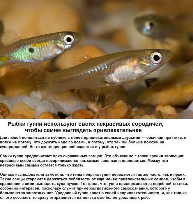seksualnye_strannosti_zhivotnykh_6_foto_2 (663x700, 333Kb)