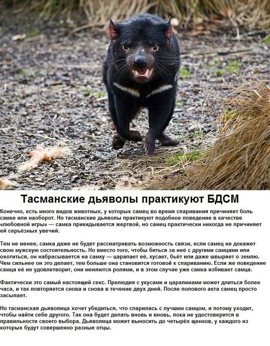 seksualnye_strannosti_zhivotnykh_6_foto_3 (547x700, 333Kb)