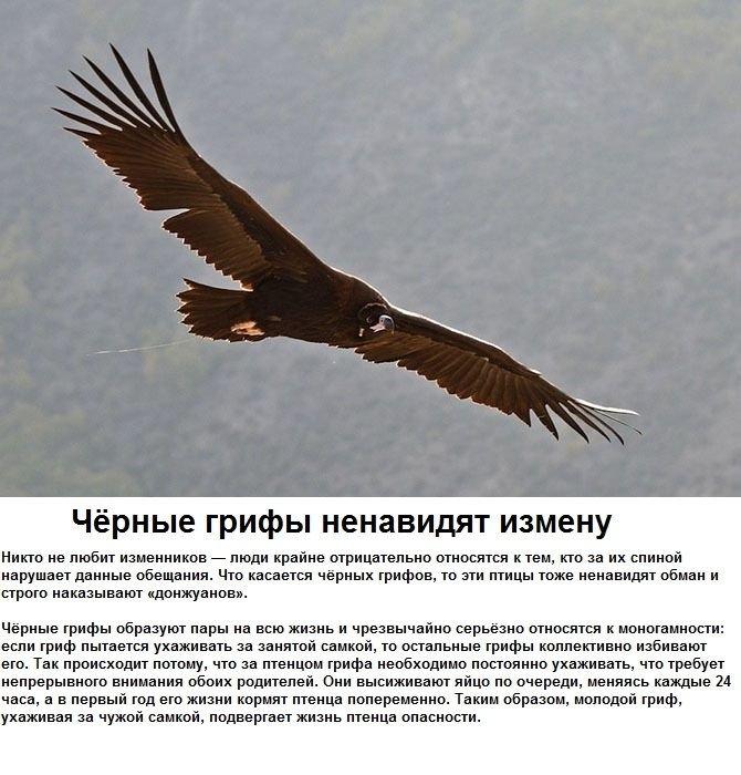 seksualnye_strannosti_zhivotnykh_6_foto_6 (670x700, 237Kb)