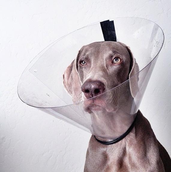 смешные собаки фото 1 (570x573, 177Kb)