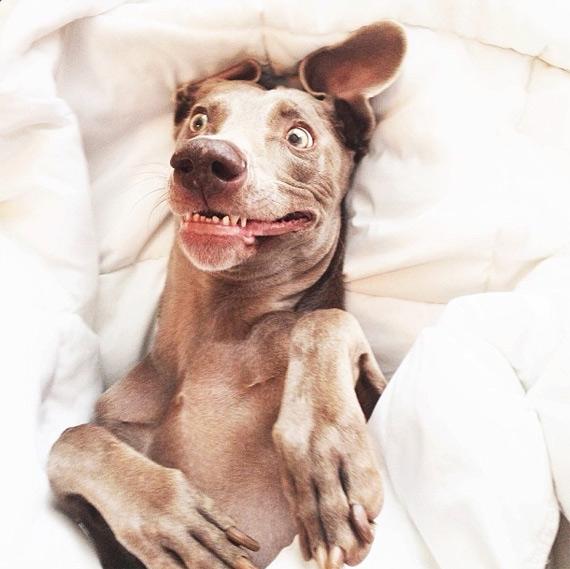 смешные собаки фото 3 (570x569, 167Kb)