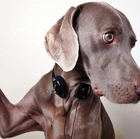 смешные собаки фото 5 (570x567, 208Kb)
