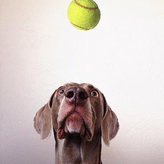 смешные собаки фото 7 (570x570, 188Kb)