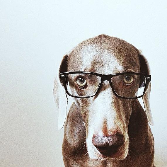 смешные собаки фото 9 (570x570, 240Kb)