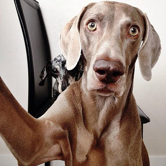 смешные собаки фото 11 (570x570, 275Kb)