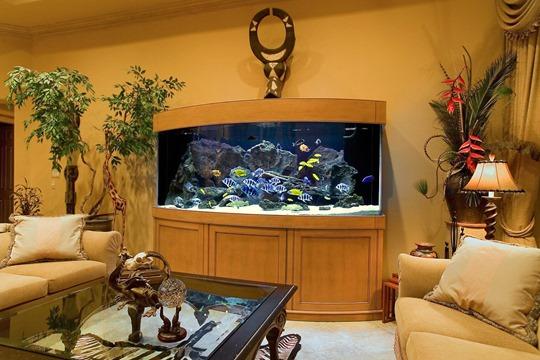 Устройство места для аквариума