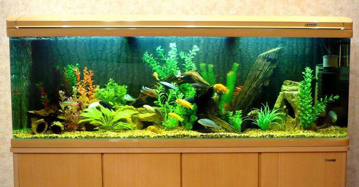 Вид аквариума с внутренним фильтром. который занимает определенное... внешнего фильтра.