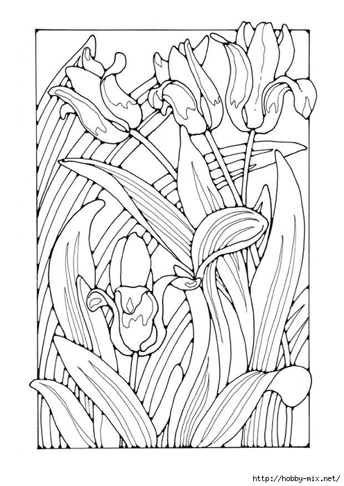 tulips-27780 (496x700, 230Kb)