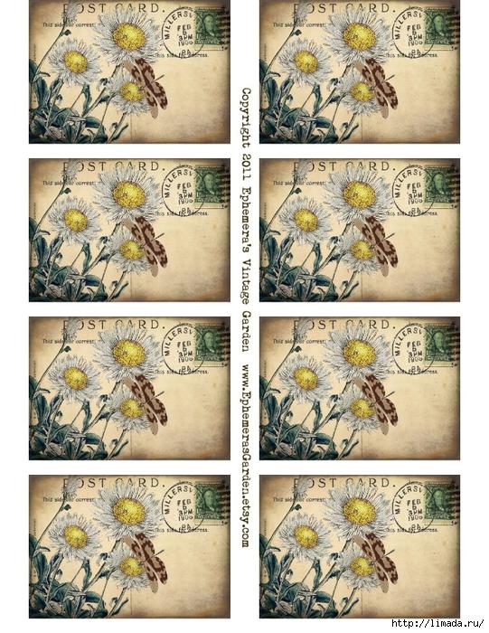 daisies SHEET (541x700, 373Kb)