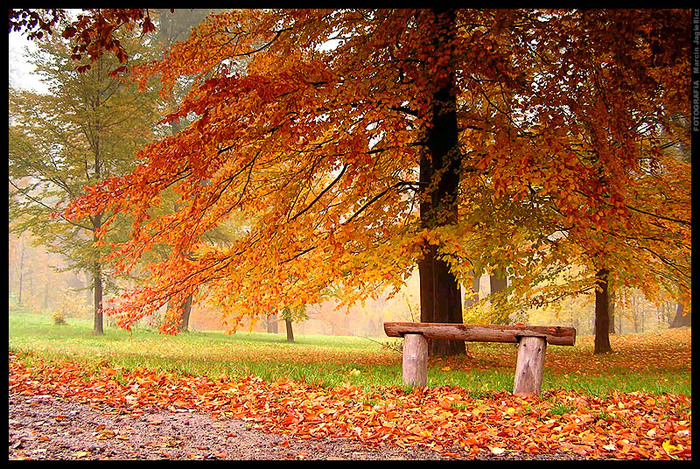 3303834_autumn_19 (700x469, 300Kb)