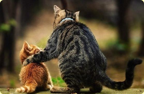 коты (557x363, 56Kb)