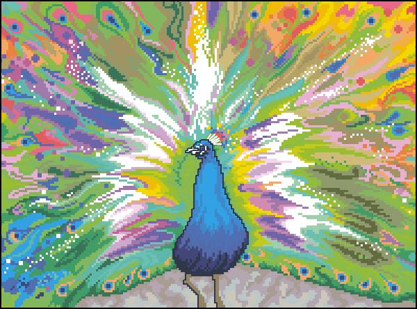JCA_02193_Rainbow_Peacock (600x444, 386Kb)